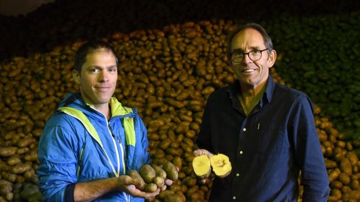 Landwirtschaft: Viele der Kartoffeln, die Andreas und Johann Märkl (rechts) aus Mitterndorf in diesem Jahr geerntet haben, sind von Hohlherzigkeit befallen. Im schlimmsten Fall kann das bei der Lagerung zu Fäule führen.