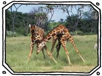 """SZ-Kolumne """"Bester Dinge"""": Seid giraffig zueinander!"""
