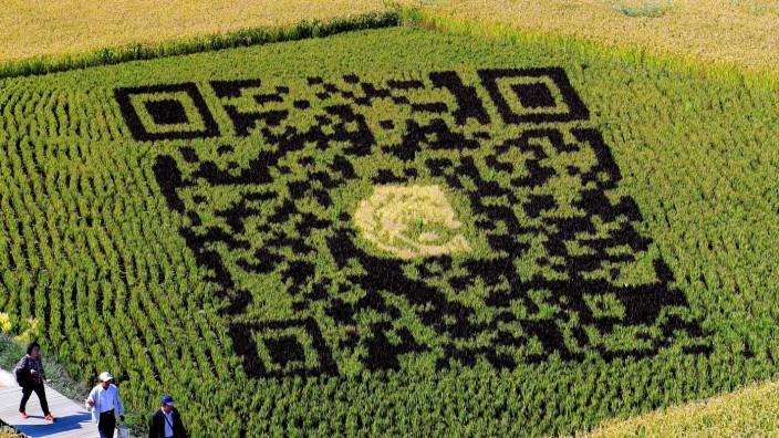 Technik: QR-Code aus unterschiedlichen Reissorten als Touristenattraktion im chinesischen Shenyang.