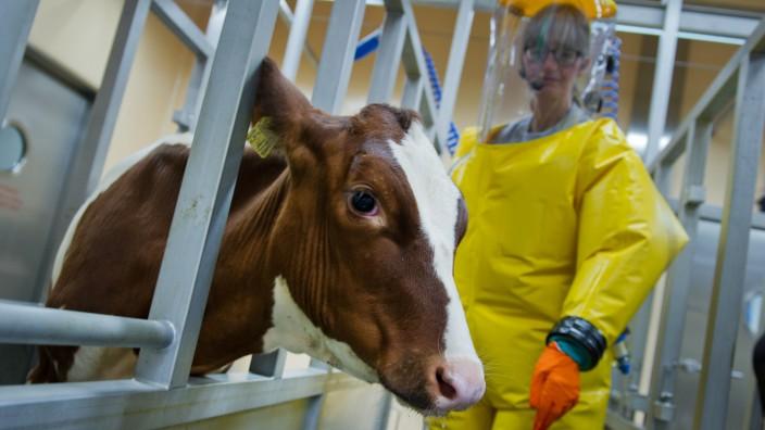 L4 Labor im Friedrich-Loeffler-Instituts für Tiergesundheit