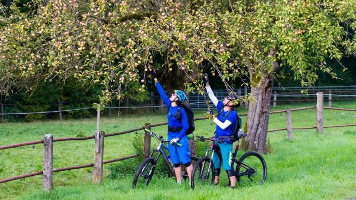 Mountainbiker auf dem Trail in der Schwäbischen Alb beim Äpfel pflücken Baden Württemberg Deutschla
