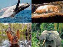 Biodiversitätskonferenz in China: Der Plan zur Rettung der Arten