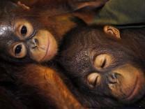 Artenschutz: Für immer verloren