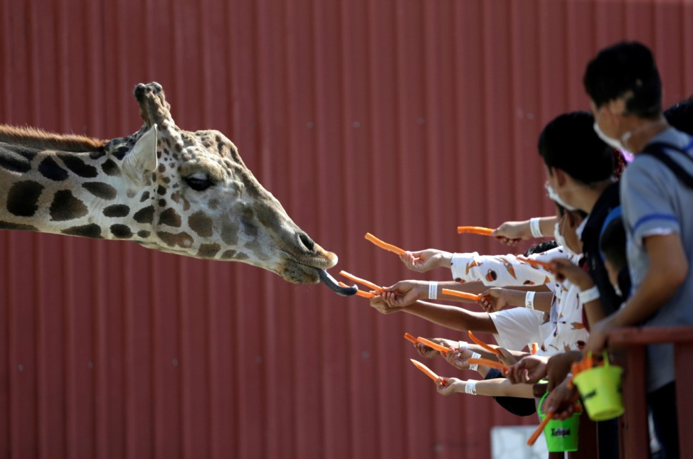 Visitors are seen giving carrots to a giraffe at their enclosure at the Xenpal Zoo in Garcia