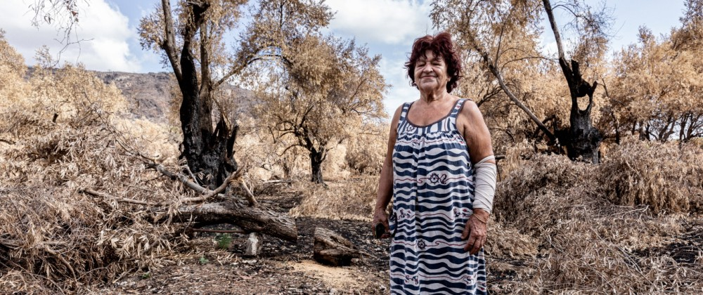 Greek Island Of Evia Strangles With Aftermath Of Wildfires And Drought A woman stands by her olive tree plantation near