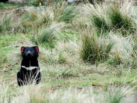 Schön skurril - Traumland Tasmanien