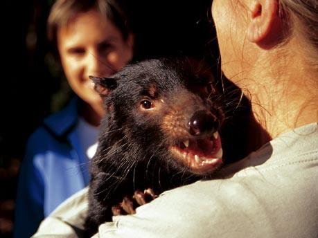 Schön skurril - Traumland TasmanienSchön skurril - Traumland Tasmanien