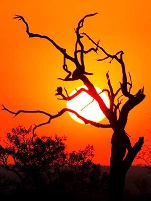 Sonnenuntergang im Krüger-Nationalpark, dpa