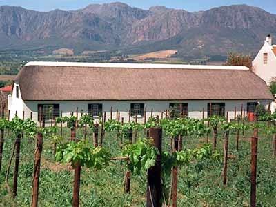 Weinanbau in Südafrika, dpa