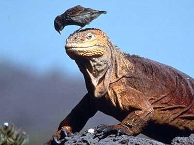 Galapagos-Fink, dpa