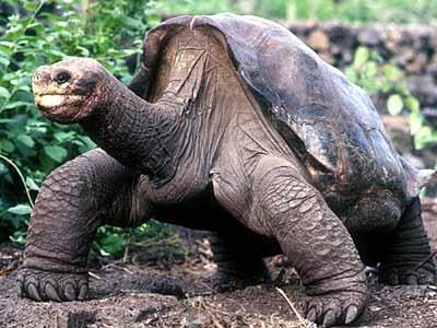 Galapagos-Schildkröte, Reuters