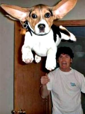 funny pictures witzige bilder