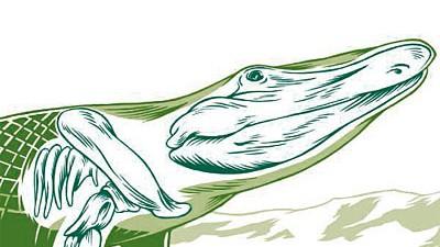 Evolution: Das Tiktaalik war das erste Tier, das nicht mehr ausschließlich im Wasser lebte. Die Flossen hat es vom Fisch, der flache Schädel mit den oben liegenden Augenhöhlen erinnert an ein Krokodil.