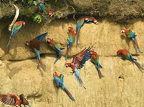 Biodiversität, Artenschutz, Reuters