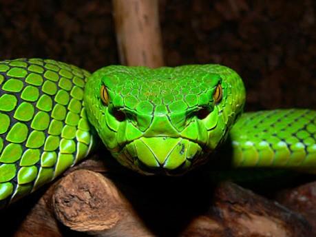 Biodiversität, Artenschutz, Rene Ries/WWF