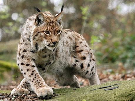 Biodiversität, Artenschutz, dpa