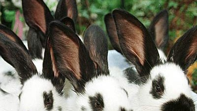Ein Kaninchen Als Geschenk Nach Ostern Landet Der Hase Im Tierheim Panorama Sz De