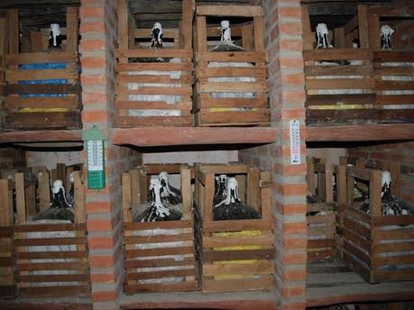 Im Bann der Anden: Tarija, Jacobs/Weber