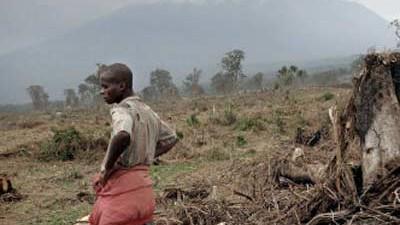 Hintergrund: Waldrodung im Virunga Nationalpark der Demokratischen Republik Kongo.