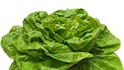 Die Salatlüge: Er fördert das Wohlbefinden, macht stark und gesund? Alles Gemüse! Der grüne Blätterkopf enthält etwa so viele Nährstoffe wie ein unbeschriebenes Stück Papier.