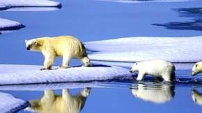 Eisbären im hohen Norden Kanadas