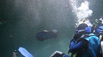 Astrid Greiner taucht im Hai-Becken im Sea-Star Aquarium in Coburg um ihre Hai-Phobie zu bekämpfen
