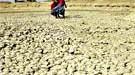 Dürre in Indien, dpa