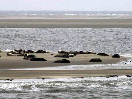 Das Wattenmeer soll UNESCO-Welterbe werden, ddp