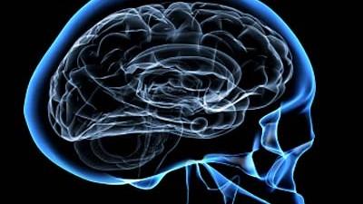 Gehirn, Hirnforschung, Psychotherapie