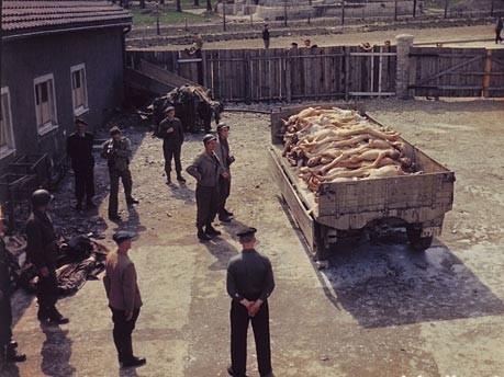 KZ-Buchenwald, einige Tage nach der Befreiung: US-Soldaten und ehemalige Häftlinge stehen vor einem Hänger mit Leichnamen im Innenhof des Krematoriums. Im Hintergrund der Zoologische Garten der SS. Foto: National Archives Washington