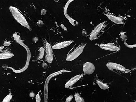 Plankton, NOAA
