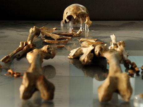 Skelett, Neandertaler, dpa