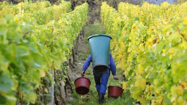 Neuer Streit um Weinabgabe