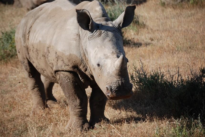 Südafrika, Safari, Tiere