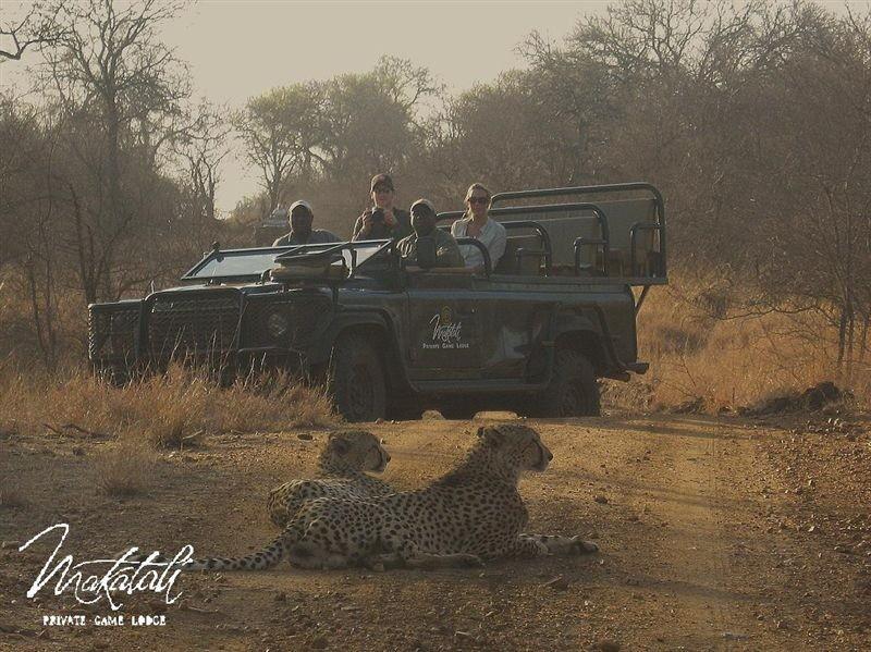 Makalali Game reserve Safari Privatreservat Südafrika