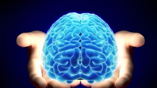 Gehirn Internet Neurowissenschaften