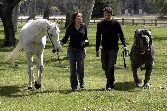 Hercules Hoax Größter Hund der Welt