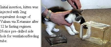 Bonsai Kitten Hoax