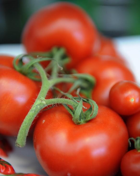 Kinderdienst: Sind Tomaten Obst oder Gemuese?