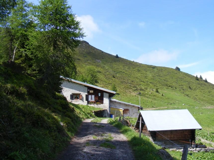 Alp-Traum: Aufnahmen vom Besuch auf der Alp Tarvisch in Graubünden in der Schweiz