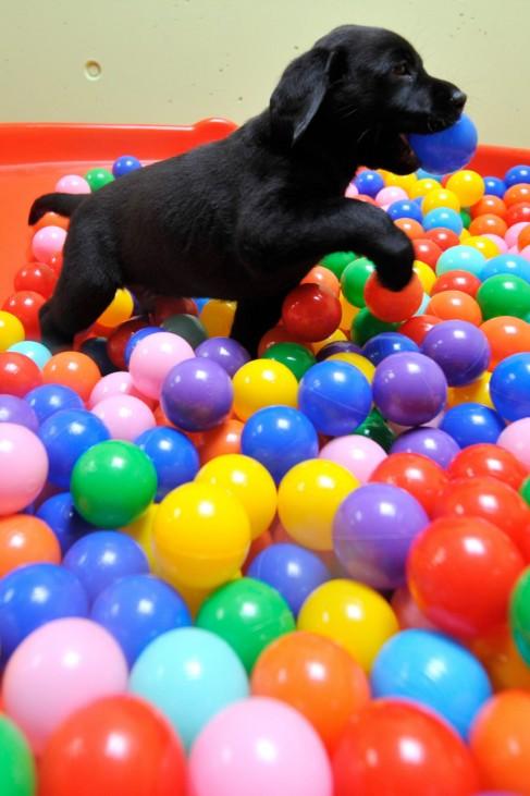 Tag der offenen Tür in der Schweiz - Welpe in Blindenführhundschule