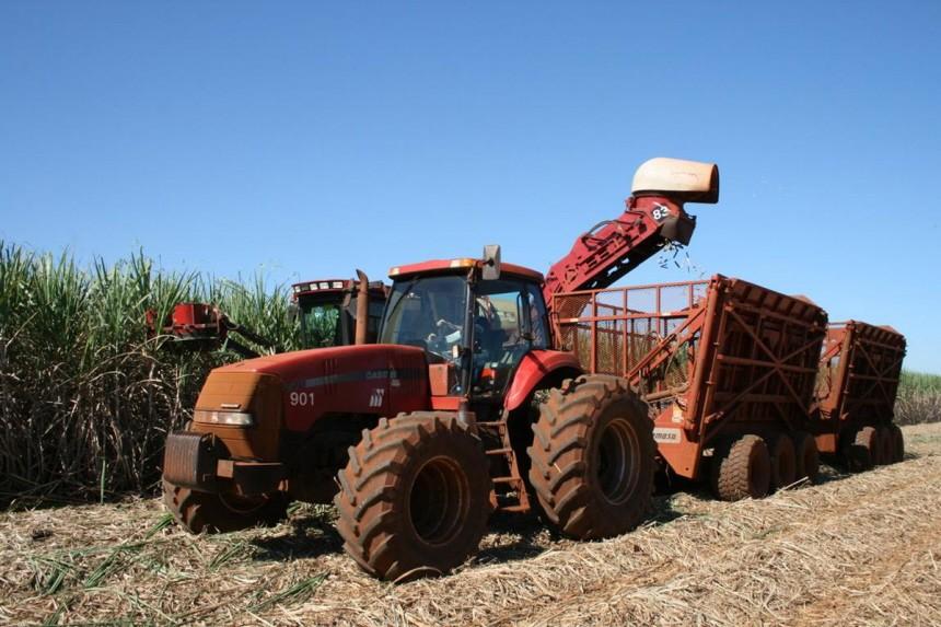 Alternative Antriebe Biosprit-Ernte in Brasilien